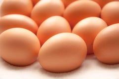 Brown hens Eggs Stock Image