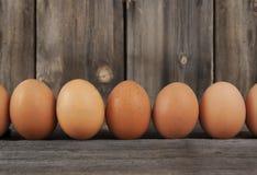 Brown-Hühnerei-Reihe Stockbilder