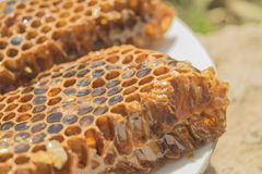 Brown honeycomb with honey in the white plate Royalty Free Stock Image