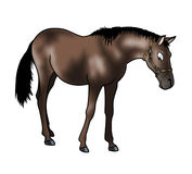 Brown horse. Cute brown horse isolated on white background - Cartoon style Royalty Free Stock Photography