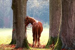 Brown horse. In the autumn Royalty Free Stock Photography