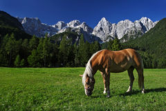 Brown horse. Under the mountains royalty free stock photos