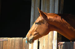 Free Brown Horse Stock Photo - 2250430