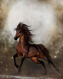 Brown Horse. A Gorgeous Galloping Brown Horse Royalty Free Stock Images