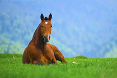 Free Brown Horse Stock Photos - 25092243