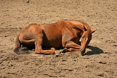 Free Brown Horse Stock Images - 2633774