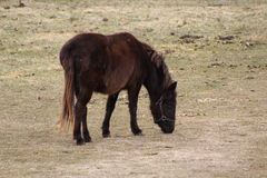 Brown horse. Brown horse Royalty Free Stock Photography