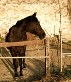 Brown Horse. A beautiful brown horse in the farm Stock Photo