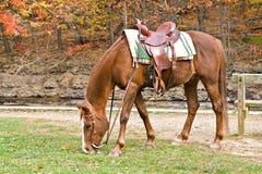 Brown Horse Autumn Royalty Free Stock Photo
