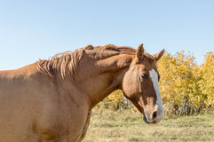Brown Horse Autumn Background Royalty Free Stock Photo
