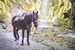Brown horse on the background of mountains and waterfall stock image