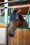 A brown horse in the barn Royalty Free Stock Images