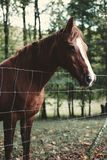 Brown Horse Behind Stainless Steel Fence Far from Trees Stock Photography