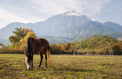 Brown horse browsing near high beautiful mountains Stock Images