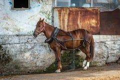Brown horse in Burgazada, Turkey Royalty Free Stock Image