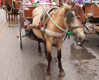 Brown horse and carriage Royalty Free Stock Image