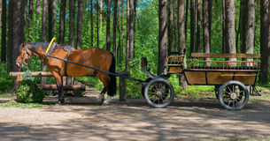Brown horse with cart. Brown horse with cart in the forest Stock Images