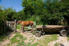 Brown horse with cart Royalty Free Stock Photography