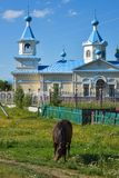 A horse and orthodox church in russian countryside stock photos