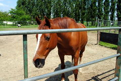 Brown horse in a cowshed Royalty Free Stock Image