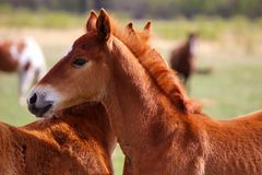 Brown Horse on Daytime Stock Photos