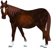 Brown Horse Stock Photography