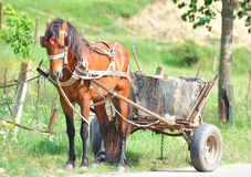 Brown horse-drawn cart. Royalty Free Stock Image