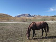 The Brown Horse. The Brown  Horse and The Durmitor`s peaks at the distance Stock Photo