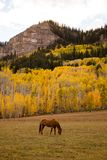 Brown Horse Eating Grass Near Mountain royalty free stock photography