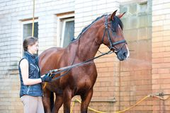 Brown horse enjoying of cooling down in the summer shower. Young cheerful teenage girl equestrian washing her chestnut horse in shower. Vibrant multicolored Stock Photos