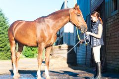 Brown horse enjoying of cooling down in the summer shower. Young teenage girl equestrian washing her chestnut horse in shower. Vibrant multicolored summertime Stock Photo