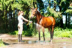Brown horse enjoying of cooling down in the summer shower. Young teenage girl equestrian washing her chestnut horse in shower. Vibrant multicolored summertime Royalty Free Stock Image