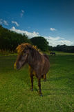 Brown horse in evening light Stock Photography