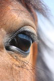 Brown horse eye. Brown horse with black mane eye close up Royalty Free Stock Photography