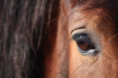 Brown horse eye close up Stock Photo