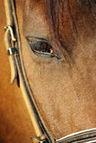 A brown horse eye (close up) in its stable Royalty Free Stock Photo