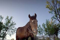 Brown horse  at a farm. Brown horse at a farm, surrounded by nature Stock Photo