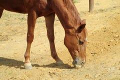Brown horse on farm Stock Photos