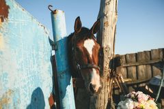 Brown horse in a fenced pen on the farm, over the fence, looking into the camera. Young curious Mare on a Sunny day royalty free stock images