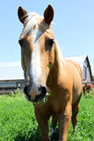 Brown horse in field Stock Photo
