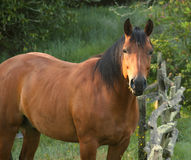 Brown horse in field. Side view of brown horse in field next to wooden fence Stock Photos