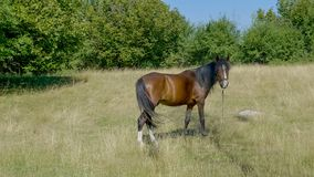 Brown horse in the field. Somewhere on the mountains in Serbia Stock Photos