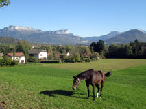 Brown horse in field in Savoy, France Stock Image