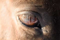 The eye of the horse Royalty Free Stock Photo
