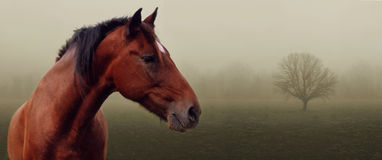 Brown horse in fog