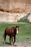 Brown horse in front of pink cliff in Utah Royalty Free Stock Photo
