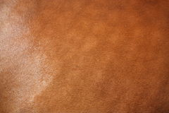 Brown horse fur close up Royalty Free Stock Photography