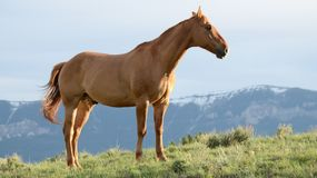 Brown Horse On Grass Field Stock Photos