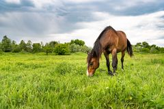 Free Brown Horse Grazing In A Meadow, Beautiful Rural Landscape With Cloudy Sky Stock Images - 117674944