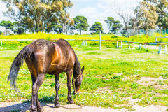 Brown horse in a green field Stock Photos